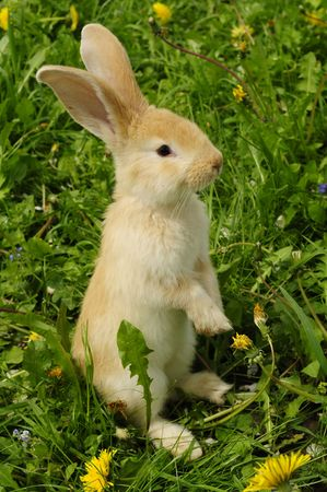 hind: Cute Rabbit Standing on Hind Legs Stock Photo