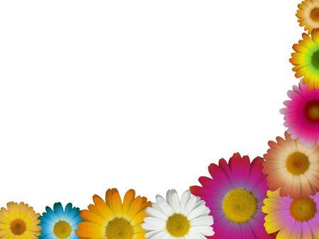 daisy flower: Multicolored Chamomile Border Stock Photo