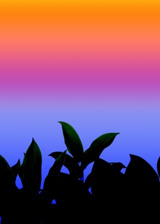 Leaves at Sunset photo