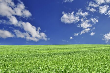Beautiful Summer Field Stock Photo - 7057401