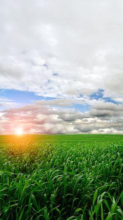 Wheat Field at Sunrise photo