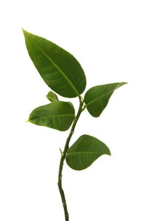 Little Green Plant Stock Photo - 7166573