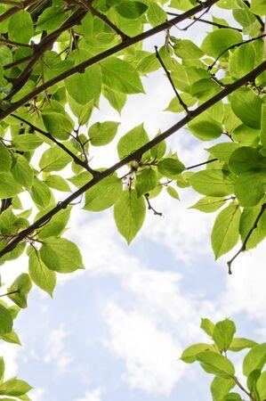 Green Twigs Stock Photo - 7343111