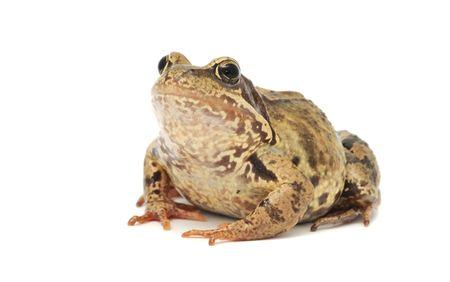weerzinwekkend: Toad