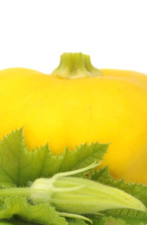 cymbling: Yellow Scalloped Squash with Leaf And Bud Stock Photo