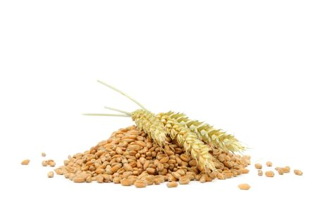 Pile of Wheat Grains with Ears photo