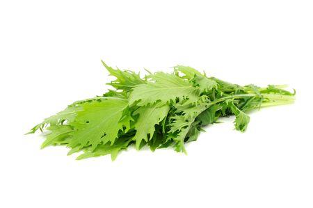 mustard leaf: Mizuna (Japanese Mustard)
