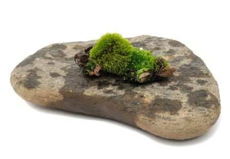 Green Moss on Stone Stock Photo - 7887122