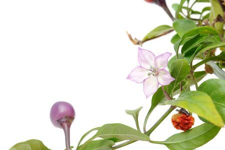 Floral Design Element Stock Photo - 7887137