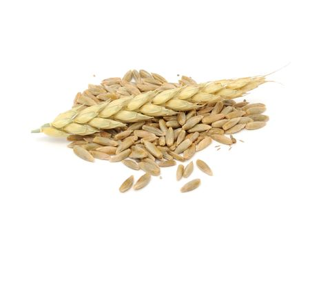 Rye Grains with Ear Stock Photo - 7887130