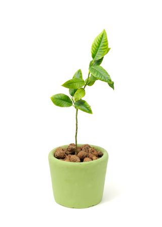 Little Green Plant Growing in Pot Isolated on White Background Stock Photo - 8046141