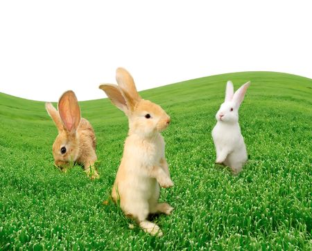 Cute Rabbits in the Field