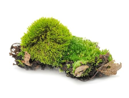 Green Moss Isolated on White Background photo