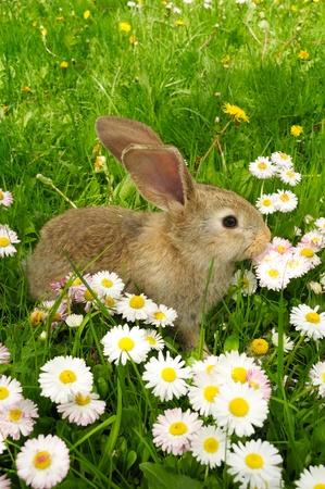 bunnie: Cute Baby Rabbit in Grass