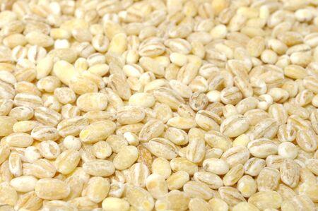 pearl barley: Pearl Barley Close-up