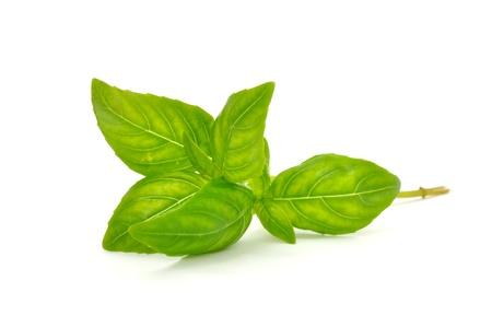 basilico: Albahaca verde aisladas sobre fondo blanco Foto de archivo