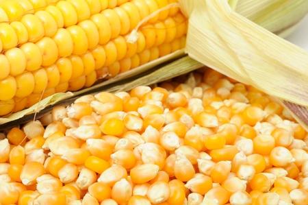 corncob: Corn Kernels And Corncob