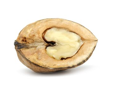 hard core: Half of Walnut Isolated on White Background Stock Photo