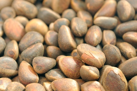 pine nuts: Pine Nuts Close-up Stock Photo