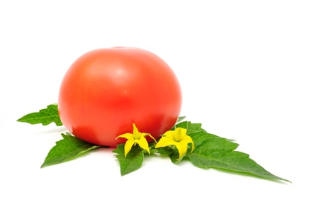 Red Tomato with Leaves and Flowers Isolated on White Background photo