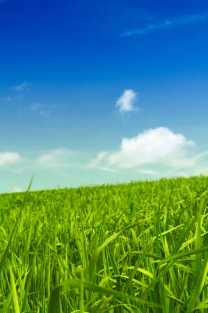 filed: Beautiful Green Field