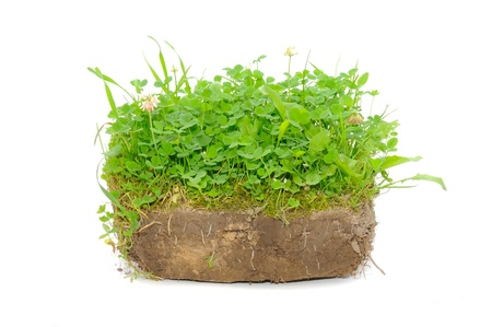 Green Plants in Soil Isolated on White Background Stock Photo - 9999050