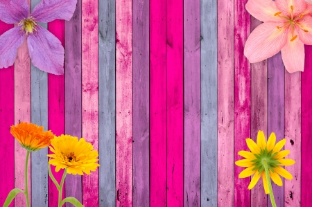 clematis flower: Pink Wood Background with Flowers