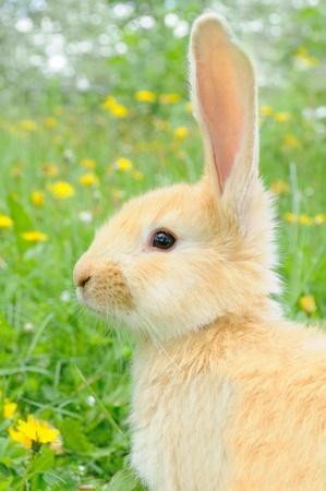 Cute Baby Rabbit photo