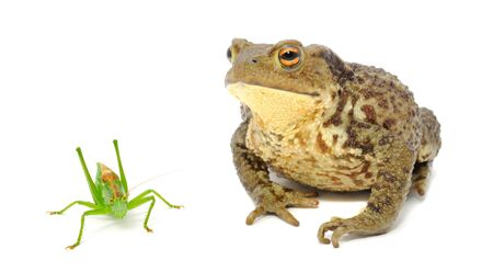anura: Frog and Grasshopper Isolated on White Background
