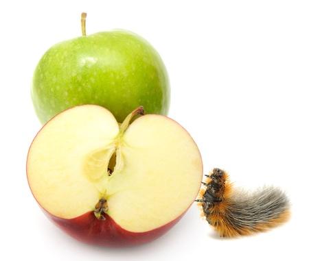 Äpfel und Caterpillar auf weißem Hintergrund