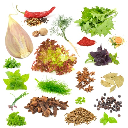 Spice and Herb Set (Garlic, Chili Pepper, Dill, Mizuna, Nutmeg, Lettuce, Parsley, Tandoori Masala, Basil, Soup Seasoning, Mint, Fennel, Anise, Bay Leaves, Chives, Cloves, Celery, Juniper Berries, Caraway Seeds) Isolated on White Background Stock Photo - 10473880