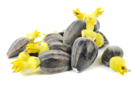 black seeds: Sunflower Seeds with Corollas Isolated on White Background Stock Photo