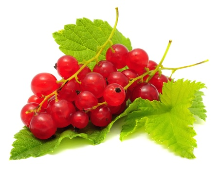 ribes: Red Currants with Green Leaf Isolated on White Background