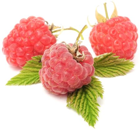 Red Raspberries Isolated on White Background Stock Photo - 10761919