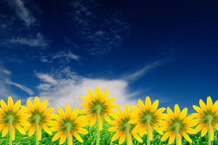 Yellow Flowers (Coneflowers) on Beautiful Summer Background photo