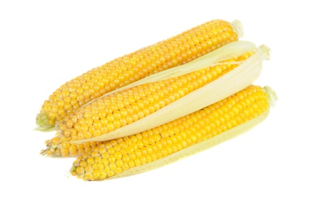 Corn on the Cobs Isolated on White Background Stock Photo - 11804932
