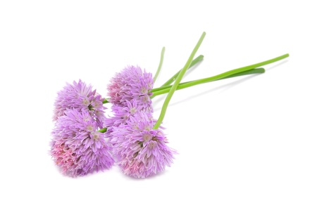 alliaceae: Chive Flowers Isolated on White Background