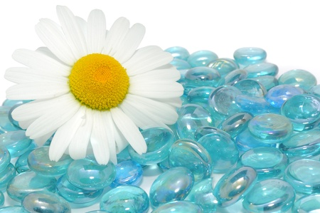 Beautiful Daisy Flower on Blue Glass Stones with Copy Space photo