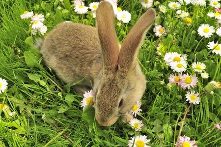 bunnie: Cute Rabbit in the Garden in Summer Stock Photo