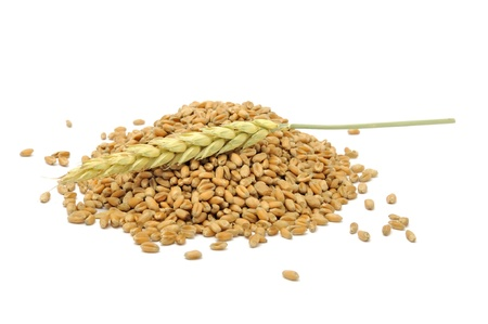 bulgur: Pile of Wheat Grains with Ear Isolated on White Background