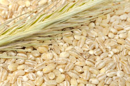 pearl barley: Pearl Barley with Ear Stock Photo