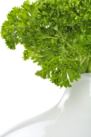 Curly Parsley in Vase on White Background photo