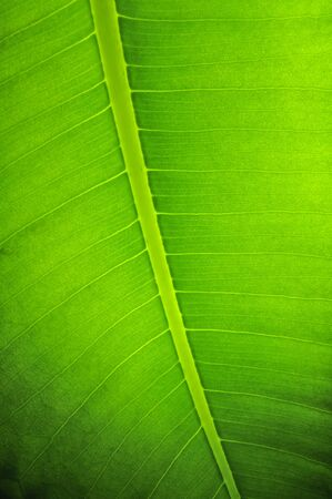 Green Leaf Texture Stock Photo - 12335376