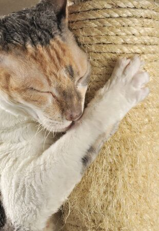 Cute Cat with Closed Eyes Scratching a Scratching Post photo