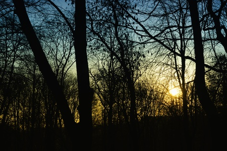 dismal: Dark Trees in the Forest Lit by the Setting Sun