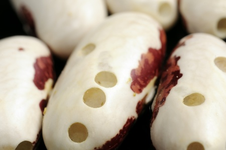 pinto: Kidney Beans Damaged by Bugs Stock Photo