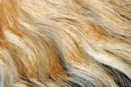 pelage: Wavy Fur Close-Up