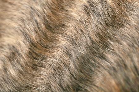 furskin: Wavy Fur Closeup