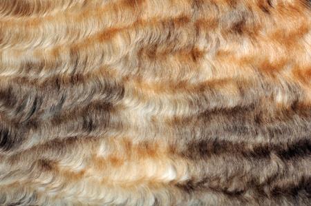 pelage: Wavy Fur Macro Stock Photo