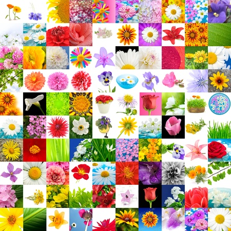 Big Collection of Flowers (Set of 100 Images) photo